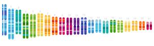 ADN Paternidad logo
